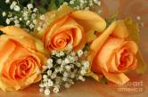 apricot-rose-bouquet-inspired-nature-photography-by-shelley-myke