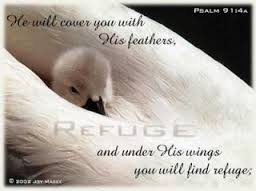 He will cover you with his feathers image