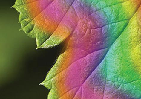 colourful-leave