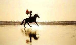 horse running on beach